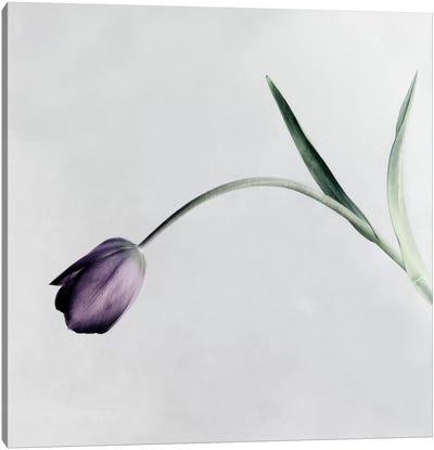 Tulip I Canvas Art Print