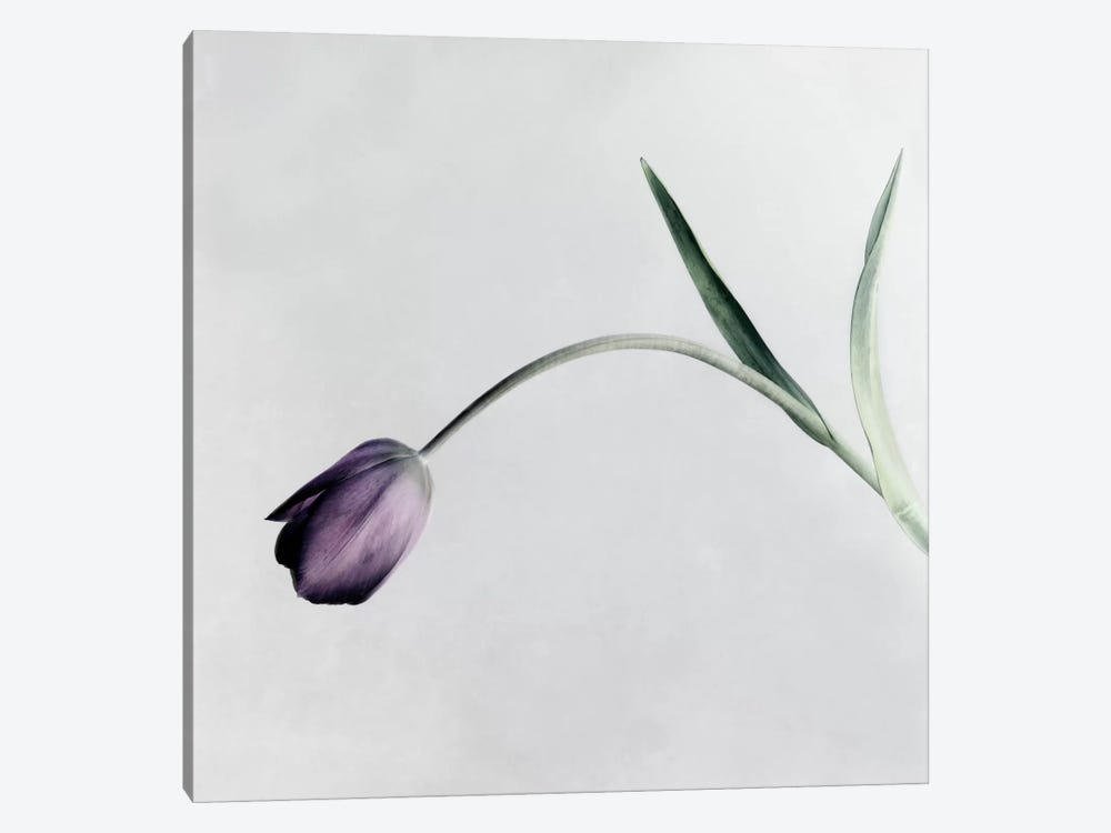 Tulip I by Symposium Design 1-piece Canvas Wall Art
