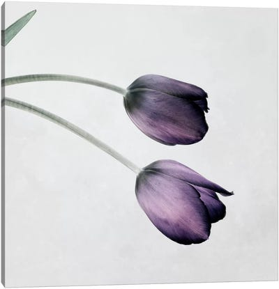 Tulip III Canvas Art Print