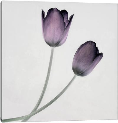 Tulip IV Canvas Art Print