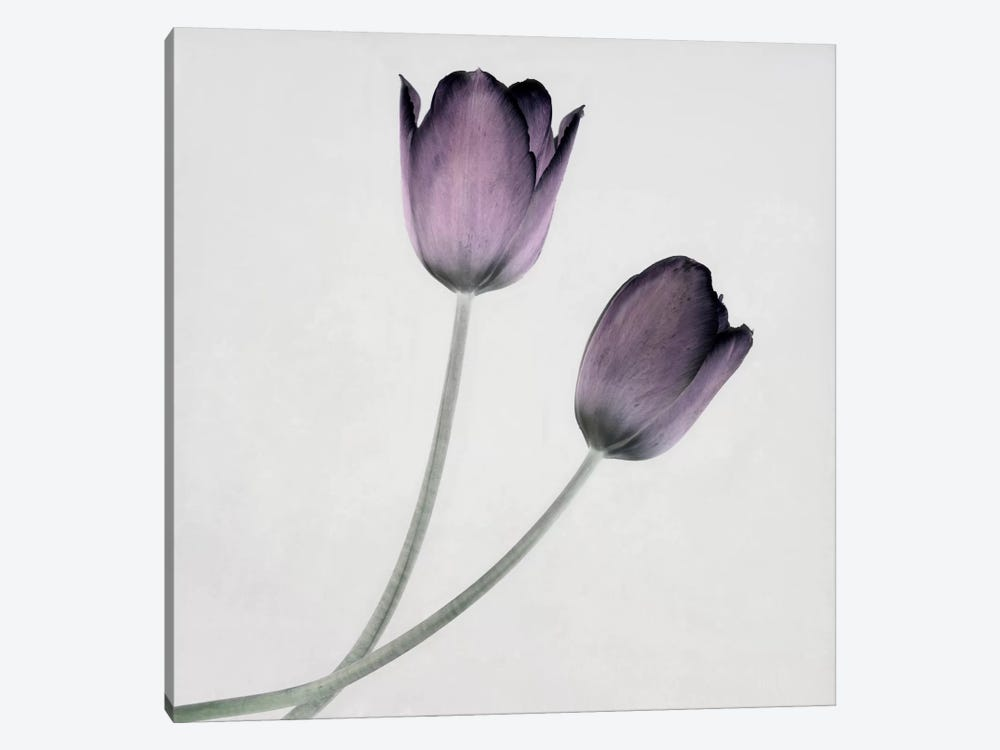 Tulip IV by Symposium Design 1-piece Canvas Artwork