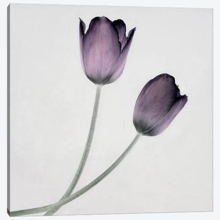Tulip IV Canvas Print #14192} by Symposium Design Canvas Art Print