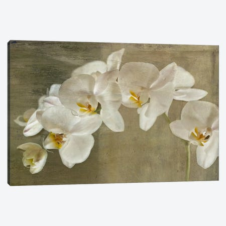 Painted Orchid Canvas Print #14193} by Symposium Design Art Print