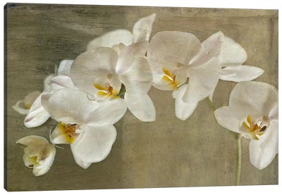 Painted Orchid Canvas Art Print