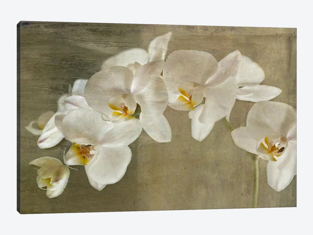 Painted Orchid by Symposium Design 1-piece Canvas Art Print