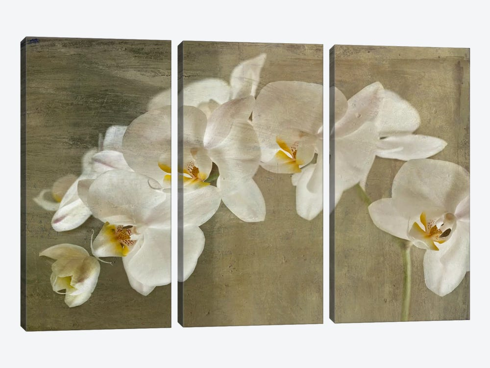 Painted Orchid by Symposium Design 3-piece Canvas Art Print