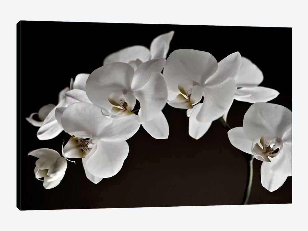 Orchids by Symposium Design 1-piece Canvas Artwork