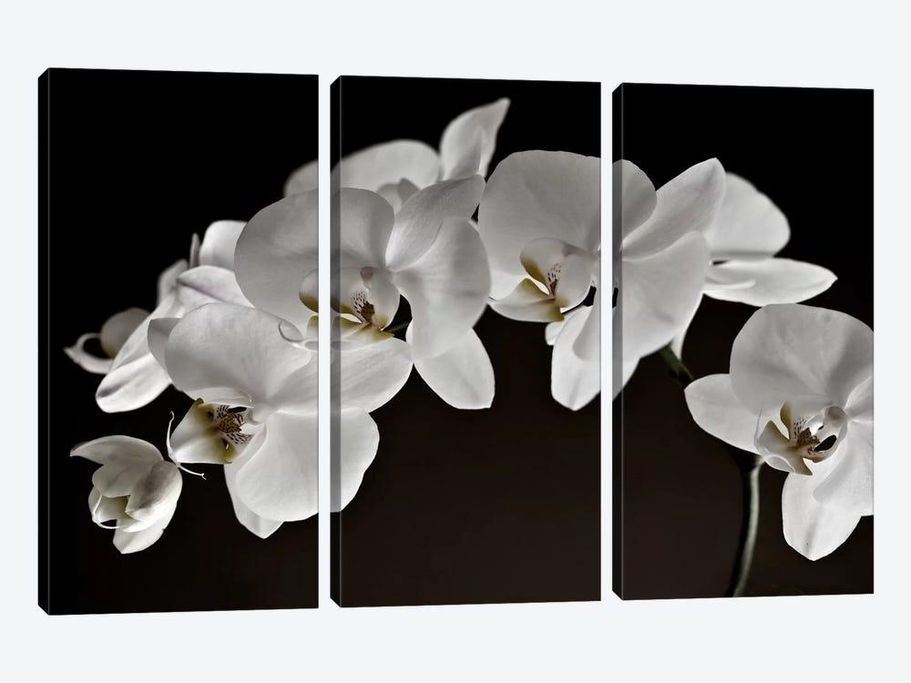 Orchids by Symposium Design 3-piece Canvas Artwork