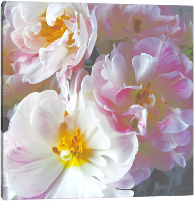 Bright Peony I Canvas Art Print