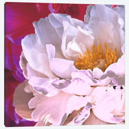 Bright Peony II Canvas Print #14196} by Symposium Design Canvas Art