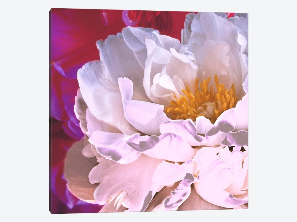 Bright Peony II by Symposium Design 1-piece Canvas Art