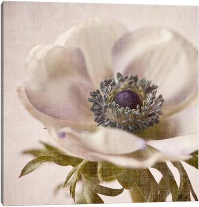 Linen Flower I Canvas Art Print