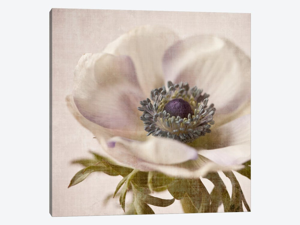 Linen Flower I by Symposium Design 1-piece Canvas Art Print