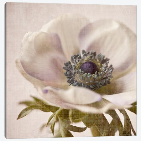 Linen Flower I Canvas Print #14202} by Symposium Design Art Print