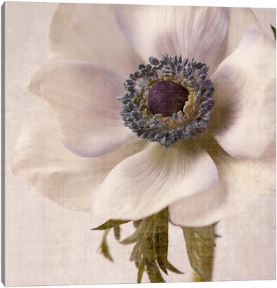 Linen Flower II Canvas Art Print