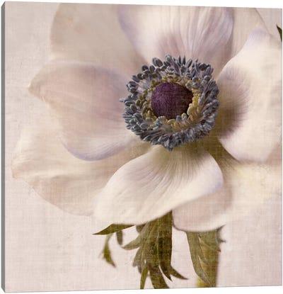 Linen Flower II Canvas Print #14203