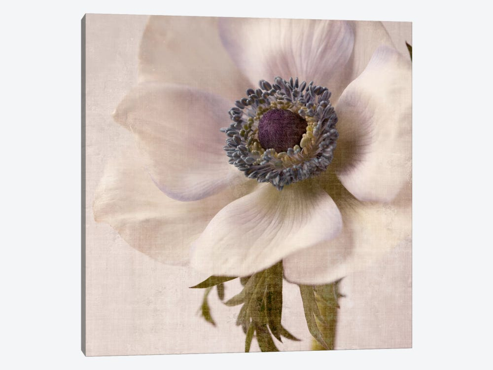 Linen Flower II by Symposium Design 1-piece Canvas Wall Art