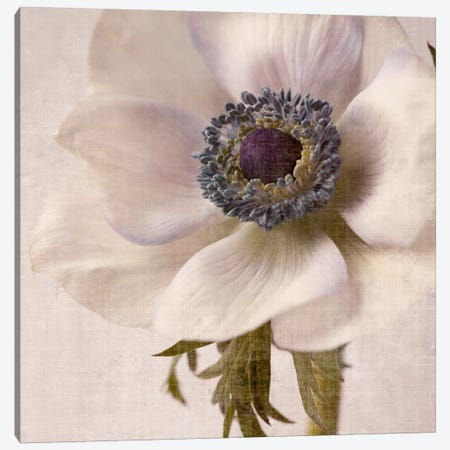 Linen Flower II Canvas Print #14203} by Symposium Design Art Print