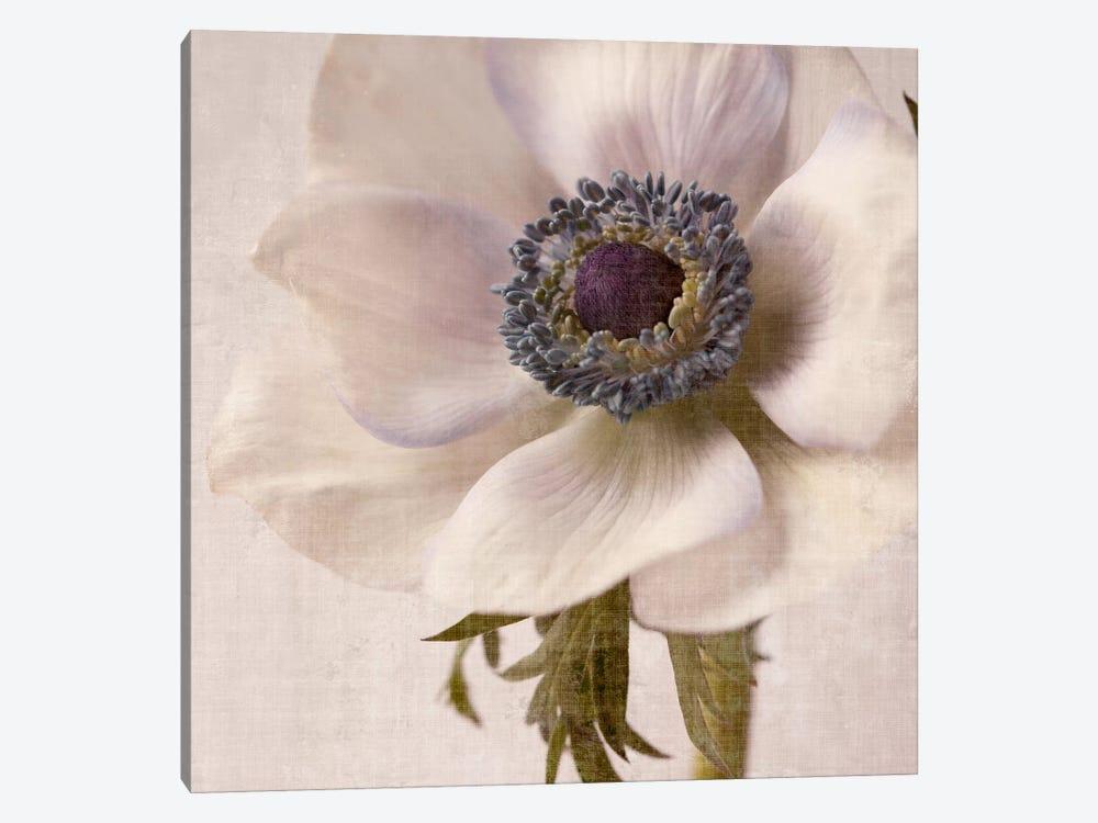 Linen Flower II by Symposium Design 1-piece Canvas Wall Art