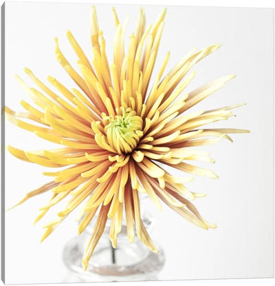 SYW 380 8657 Canvas Art Print