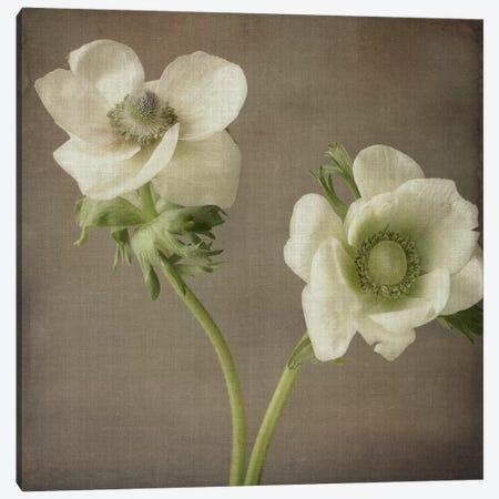Anemone I Canvas Print #14213} by Symposium Design Canvas Artwork