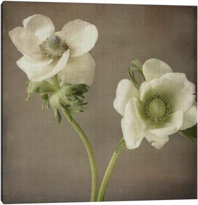 Anemone I Canvas Art Print