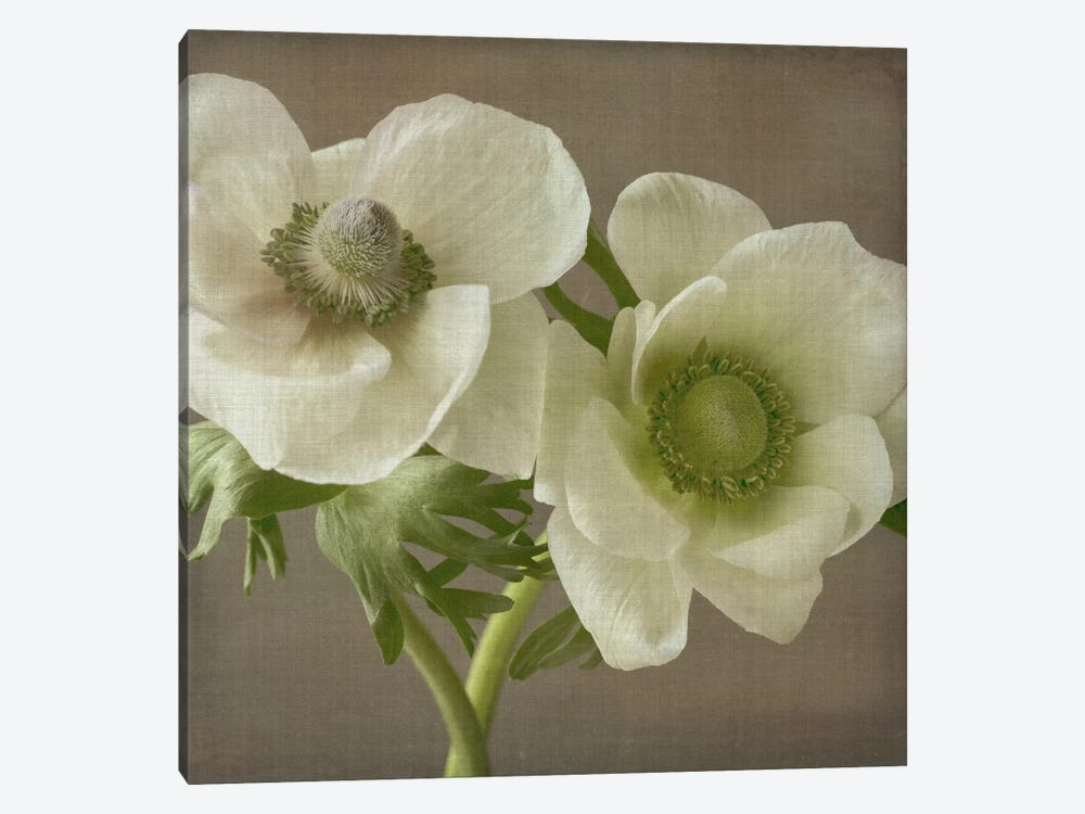 Anemone II by Symposium Design 1-piece Canvas Art