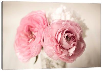Ranuncula Pink Vase Canvas Print #14216