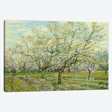 The White Orchard Canvas Print #14254} by Vincent van Gogh Canvas Art Print