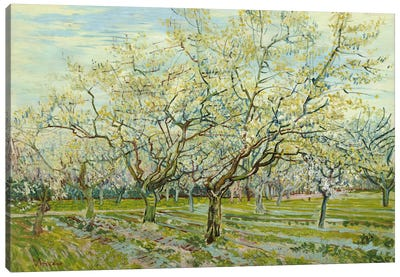The White Orchard Canvas Art Print