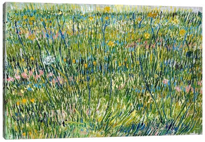 Patch of Grass Canvas Art Print