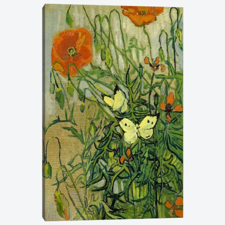 Butterflies and Poppies Canvas Print #14327} by Vincent van Gogh Canvas Art Print