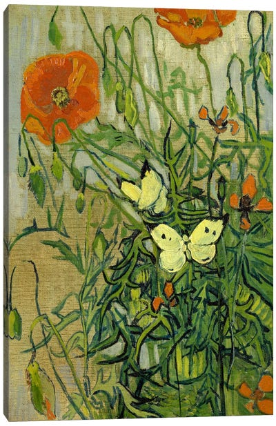 Butterflies and Poppies by Vincent van Gogh Canvas Art Print