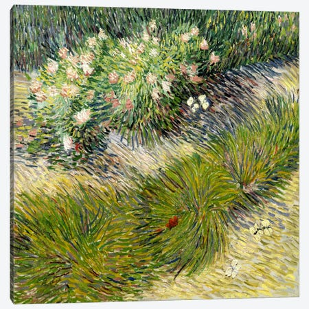 Grass & Butterflies Canvas Print #14344} by Vincent van Gogh Canvas Print
