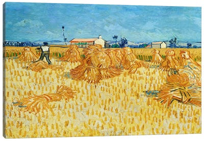 Harvest in Provence Canvas Print #14345