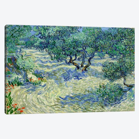 Olive Orchard Canvas Print #14369} by Vincent van Gogh Canvas Wall Art