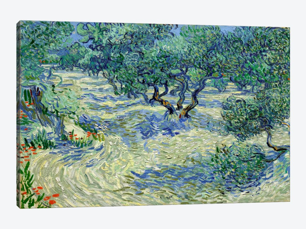Olive Orchard by Vincent van Gogh 1-piece Canvas Art Print