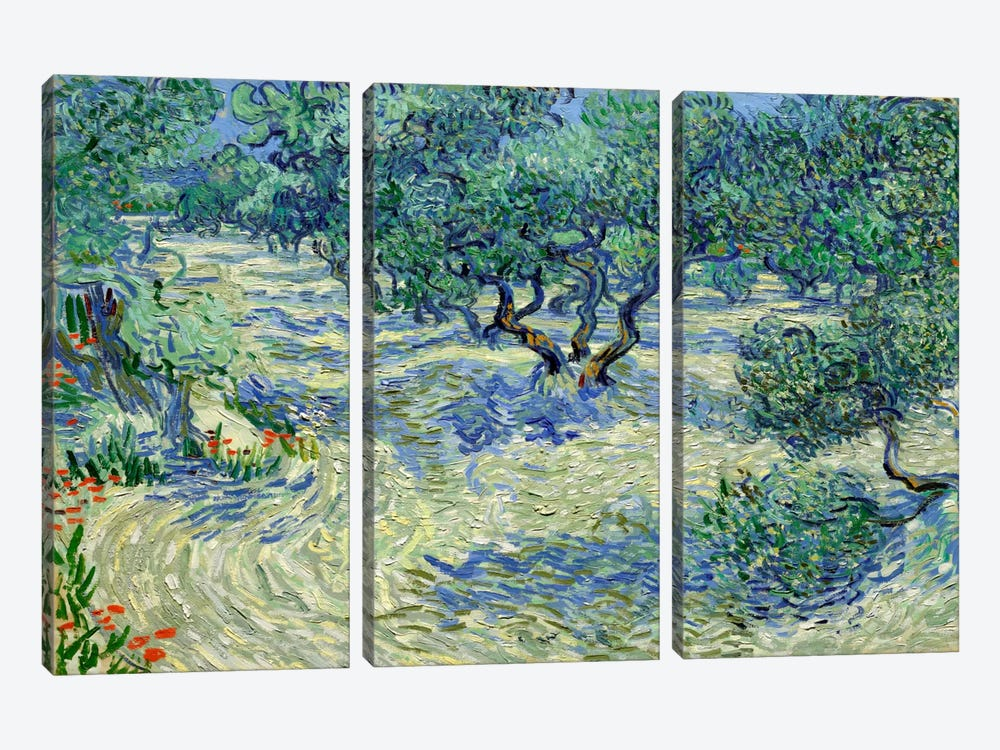 Olive Orchard by Vincent van Gogh 3-piece Canvas Art Print
