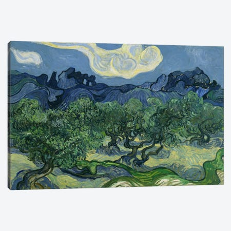 Olive Trees with the Alpilles in the Background Canvas Print #14370} by Vincent van Gogh Canvas Print