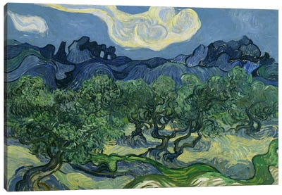 Olive Trees with the Alpilles in the Background Canvas Art Print