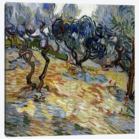 Olive Trees Canvas Print #14371} by Vincent van Gogh Canvas Print