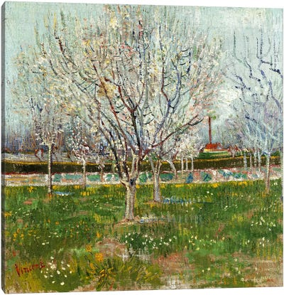 Orchard in Blossom (Plum Trees) Canvas Print #14372