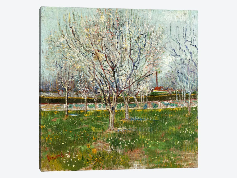Orchard in Blossom (Plum Trees) by Vincent van Gogh 1-piece Canvas Print