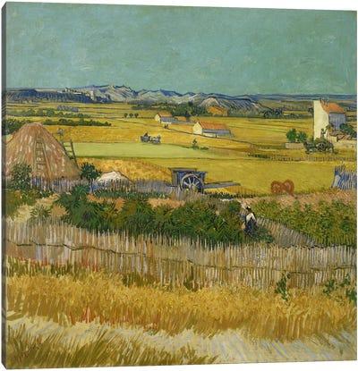 The Harvest Canvas Art Print