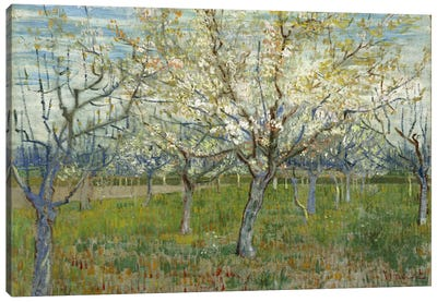 The Pink Orchard Canvas Art Print