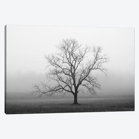 Velvet Sunrise Canvas Print #14662} by Nicholas Bell Photography Canvas Print