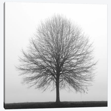 Winter Trio I Canvas Print #14664} by Nicholas Bell Photography Canvas Art