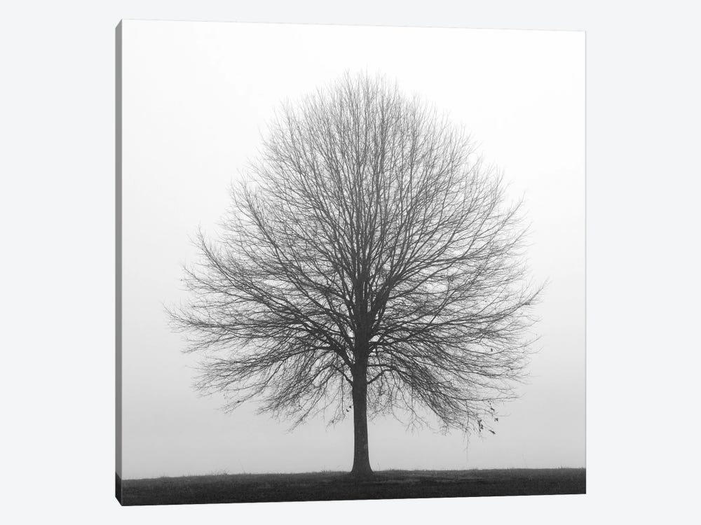 Winter Trio I by Nicholas Bell Photography 1-piece Canvas Wall Art