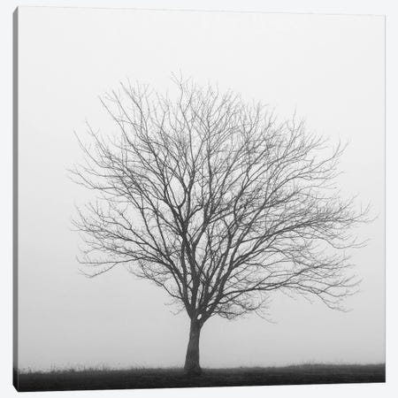 Winter Trio II Canvas Print #14665} by Nicholas Bell Photography Canvas Art