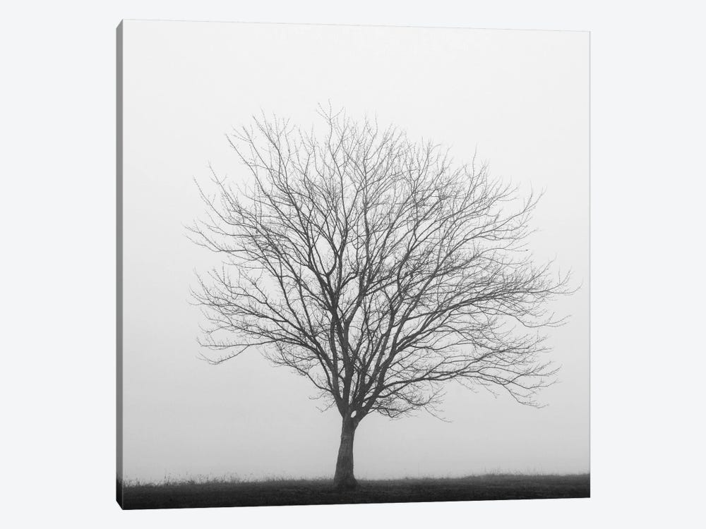 Winter Trio II by Nicholas Bell Photography 1-piece Canvas Art Print